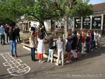 Cadaujac : les écoliers ont végétalisé leur cour de récréation - Sud Ouest
