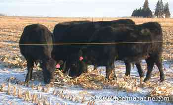 Better management can reduce beef production emissions
