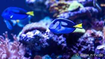 Verlust an biologischer Vielfalt: Ozeanerwärmung vertreibt Arten vom Äquator