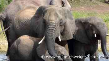Debatte um Tierschutz: Botsuana erteilte hunderte Lizenzen für Elefanten-Jagd