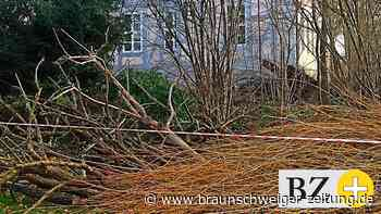 Künstler erschaffen natürliche Holzskulpturen in Meinersen