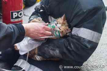 Quatre chatons sauvés des flammes à Mouy - Courrier Picard