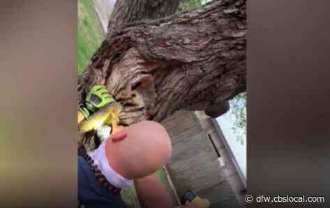 Firefighters In Texas Rescue Squirrel Stuck Halfway Inside Tree