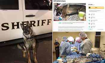 Washington Police crowdfund 70k for K-9 before admitting they shot him