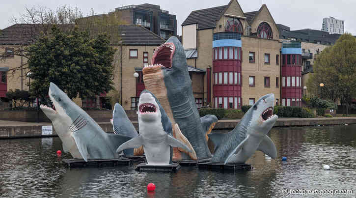 The Regent's Canal sharks have moved to Islington