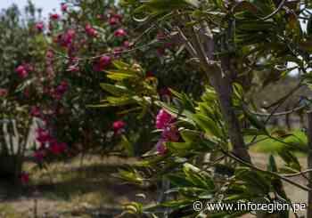 Bosque de Huarmey: Más de 20 años innovando el transporte mineral de Antamina - INFOREGION