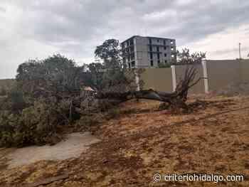 Torbellino dañó una barda y arrancó algunos árboles, en Apan - Criterio Hidalgo