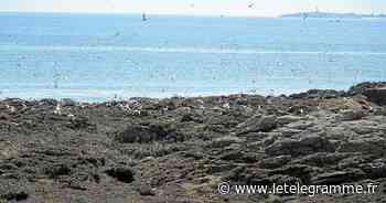 Fouesnant - Accès restreint à l'île aux Moutons pour préserver les sternes - Le Télégramme