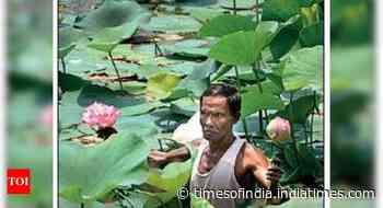 Lotus in bloom, good news for Muslim farmers