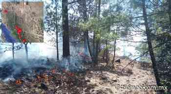 Extinguieron gran incendio forestal que quemó bosque en San Juanito - El Tiempo de México
