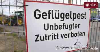 Vogelgrippe im Kreis Ravensburg: Fall von Geflügelpest in Bad Wurzach bestätigt - Schwäbische