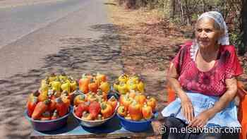 Pareja de ancianos en Intipucá aprovecha la temporada del marañón para vender y ahorrar el dinero para comprar agua - elsalvador.com