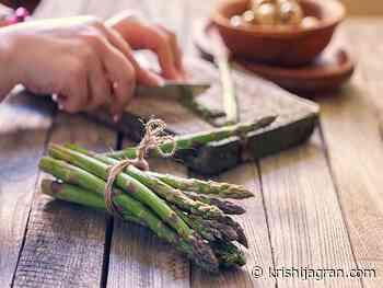 DIY Ayurvedic Health Recipes of Indian Asparagus - Krishi Jagran