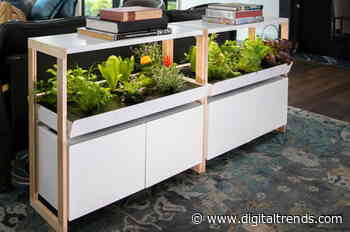 I didn't think I could grow veggies at home, but a smart garden showed me how