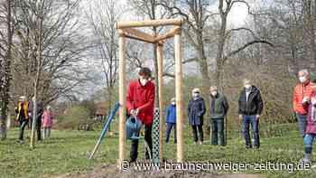 Ein Apfelbaum im Fallersleber Schlosspark zu Ehren Hoffmanns