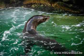 Al zijn er geen dolfinaria of plannen daarvoor, Brussel verbiedt het houden van zeeleeuwen