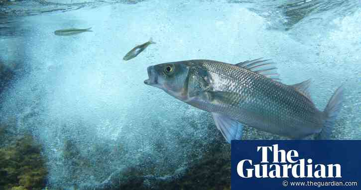 Can fish feel pain? The jury is still out | Letter