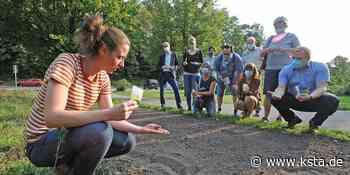 Tipps in Burscheid: Wie die eigene Wildblumenwiese gelingt - Kölner Stadt-Anzeiger