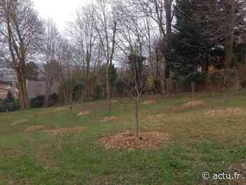 Yvelines. Aubergenville : un verger fait son apparition dans le parc du château du Vivier - actu.fr
