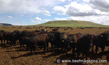 Biosecurity Considerations when transitioning newly purchased cattle into the herd