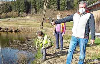 Amphibienzeit in Dietersdorf - PNP Plus