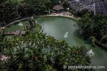 Mangal das Garças recebe pássaros resgatados em Barcarena - Portal Amazônia