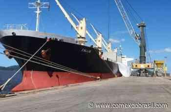 Porto de Antonina realiza operação pioneira na importação de malte para cervejaria brasileira - Comex do Brasil