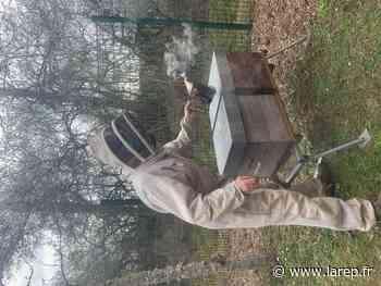 Des abeilles comme outils pédagogiques - Sully-sur-Loire (45600) - La République du Centre