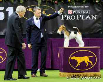 Westminster Kennel Club: 2022 Dog Show Returning to New York City - Pet Age