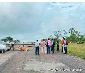 Santa Rosa del Sur: avioneta se estrelló contra dos vacas - El Universal - Colombia