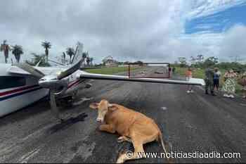 Tres vacas causaron accidente de avioneta en Santa Rosa del Sur, Bolívar - Noticias Día a Día