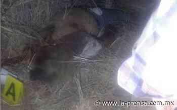 Descubren cuerpo putrefacto en el fondo de una barranca en Ixtapaluca - La Prensa