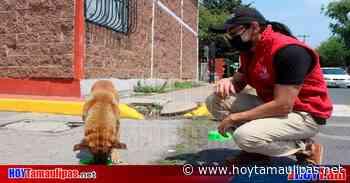 Recolectan alimentos para perros callejeros en Ixtapaluca - Hoy Tamaulipas