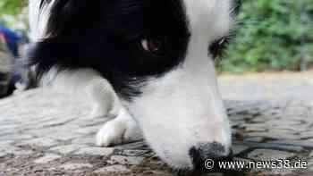 Hund in Braunschweig: Diese Gassistrecke könnte tödlich enden! - News38