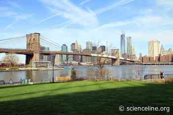 The lost and future wildlife of New York City's East River - Scienceline