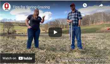 Forage Focus: Tips for Spring grazing
