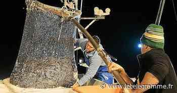 À Douarnenez, la belle dynamique du port de pêche du Rosmeur se poursuit - Le Télégramme