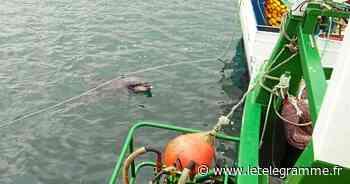À Douarnenez, un dauphin en visite au Rosmeur pour le lundi de Pâques - Le Télégramme