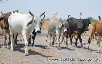 Prevén que se comience a presentar mortalidad de ganado en Guadalupe Victoria - El Sol de Durango