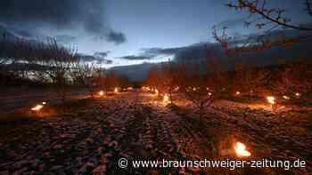 Mit Feuer gegen den Frost im Frühling