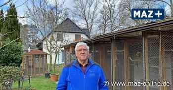 Karl-Heinz Arnholdt aus Falkensee ist begeisterter Vogelzüchter - Märkische Allgemeine Zeitung