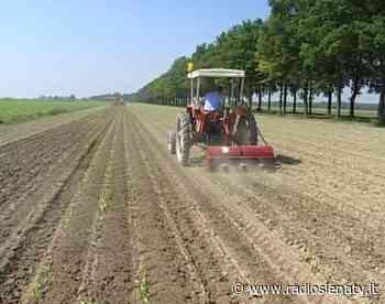 Decreto Sostegni, mobilitazione sindacati lavoratori agricoli davanti alla Prefettura di Siena - RadioSienaTv