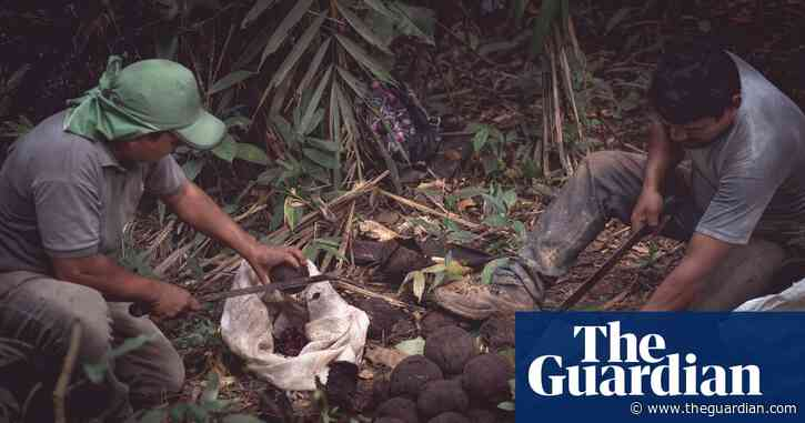 The 'forgotten' people picking your Brazil nuts – for a fraction of the price