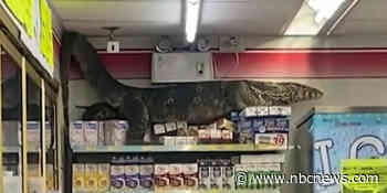 Giant lizard climbs store shelves in Thailand 7-Eleven