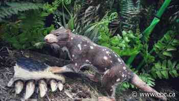 Scientists unearth skunk that walked among dinosaurs