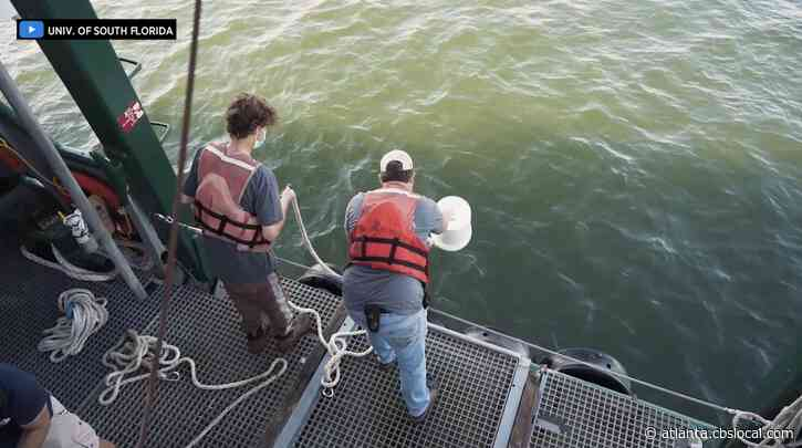 USF Researchers Lead First Cruise To Study Piney Point Wastewater Leak