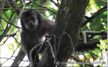 Unidades de Conservação de Palmital já registraram 22 espécies de mamíferos de médio e grande porte – Correio do Cidadão - Correio do CIdadão