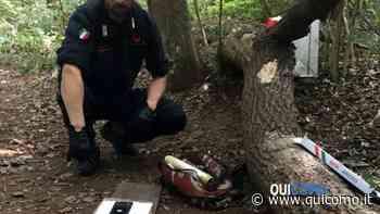 Troppa droga nei boschi del Comasco: Inverigo, Monguzzo e Lambrugo le aree più colpite - QuiComo