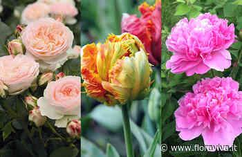 Floricoltura, Affi: solo con gli eventi piena ripresa. La top ten dei fiori - www.floraviva.it