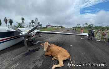 Vacas causan accidente de avioneta en aeródromo de Santa Rosa del Sur, Bolívar - RCN Radio